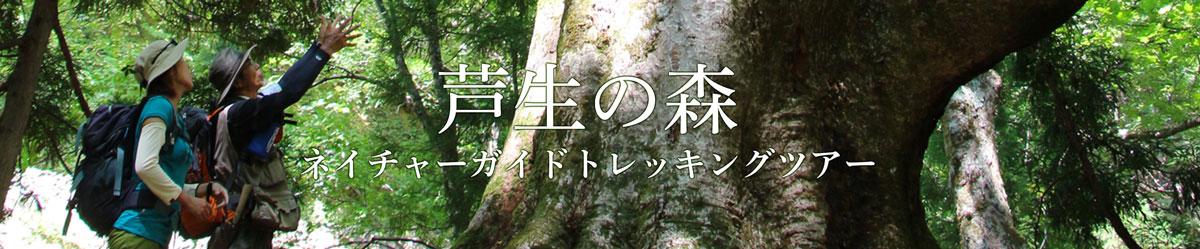 芦生の森ネイチャーガイドトレッキングツアー